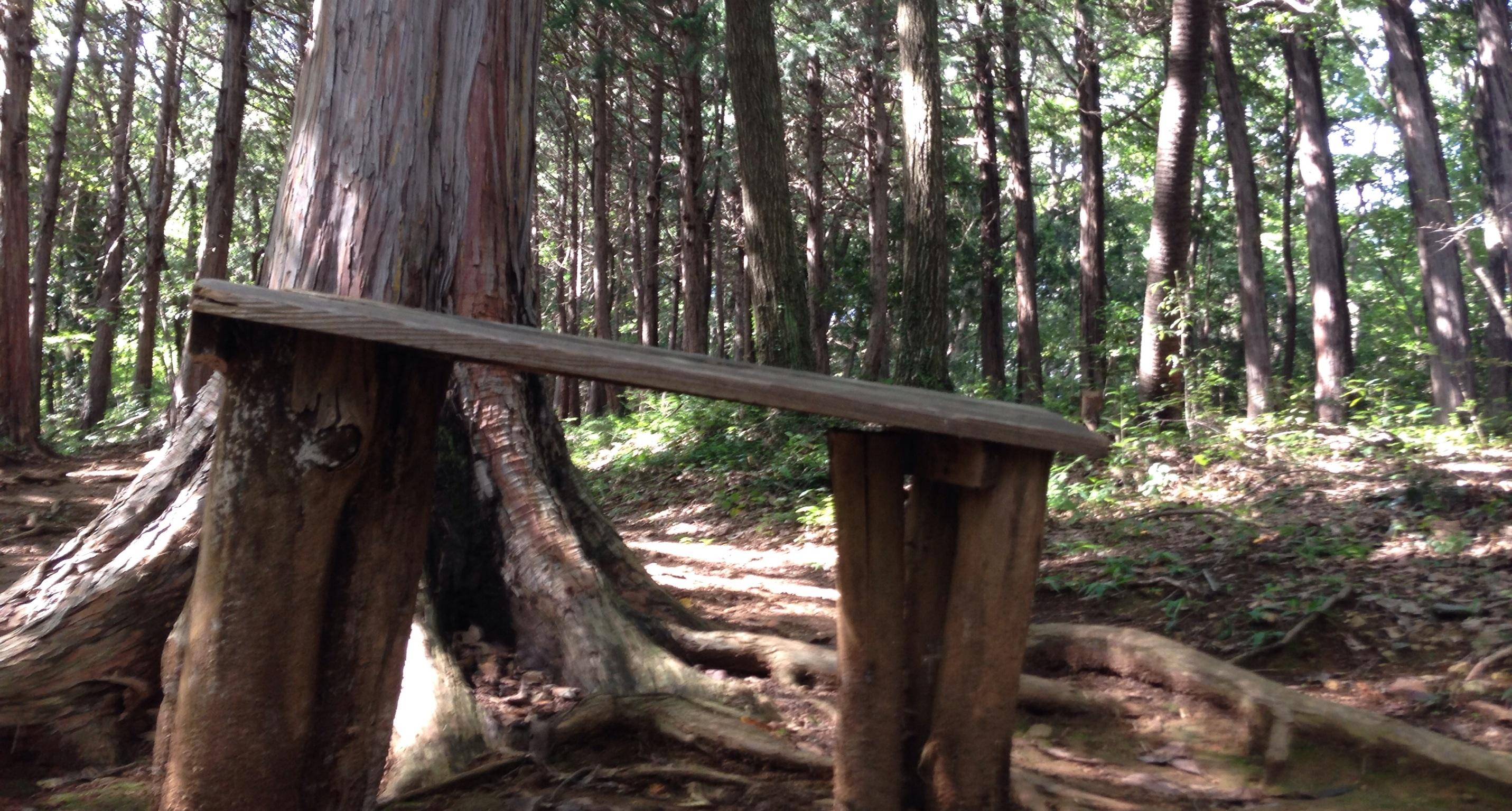 山路の小さな小さなベンチ