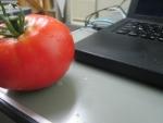 20160714昼トマト