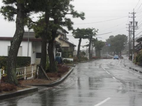 浜名旧街道松並木