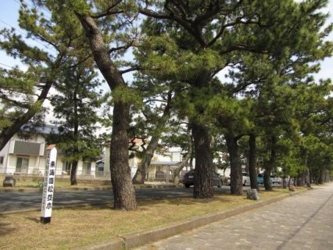 舞阪町の東海道松並木