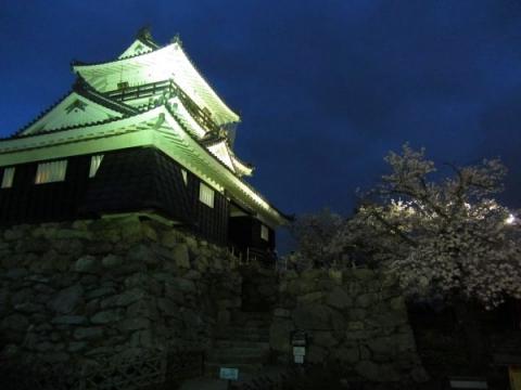 浜松城夜桜