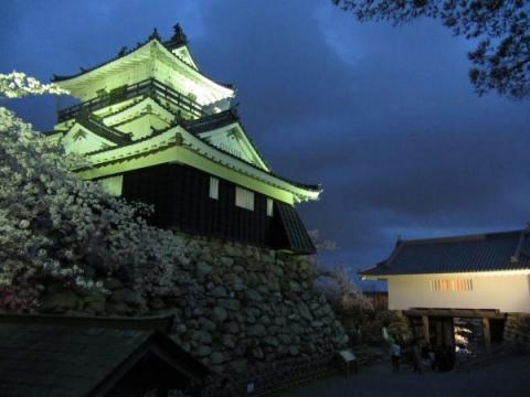 浜松城天守と夜桜