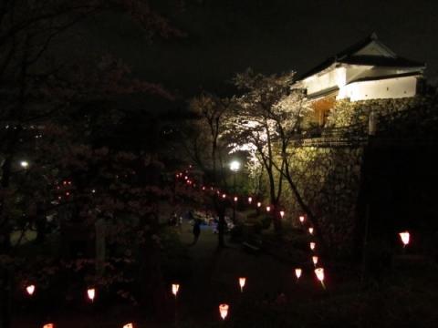 浜松城天守門と夜桜