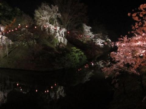 上田城夜桜