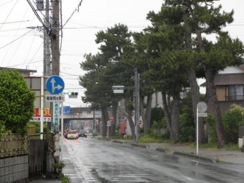 薬師町の松並木