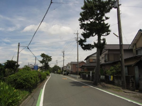 国本の旧東海道松並木
