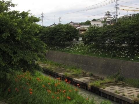逆川と掛川城