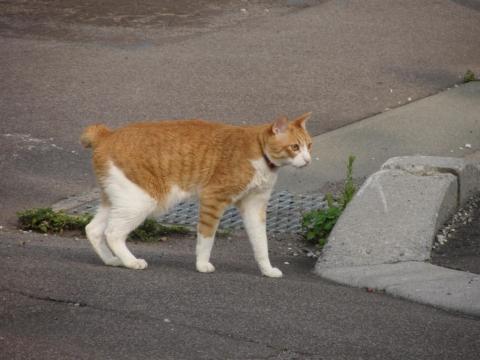 姿見坂の猫
