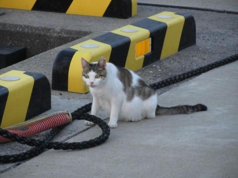船着場の猫