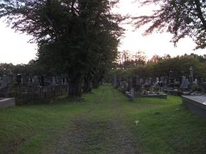 160901墓の間の道