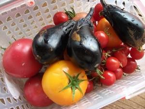 160913野菜収穫