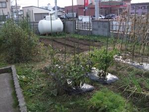 161021トニー農園