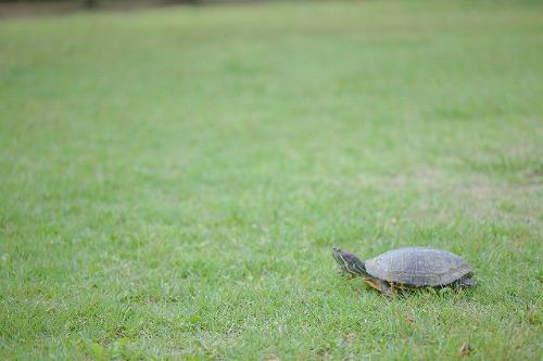 亀 のんびり ゆっくり コツコツ
