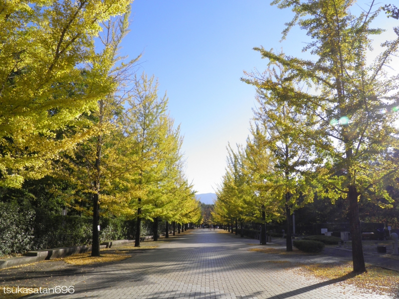 20151025_chichibu_muse_park_04