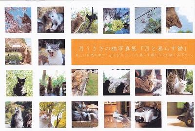 猫はがき_0001