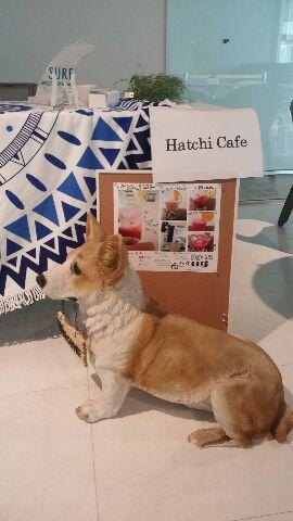 017_Hachi Cafe
