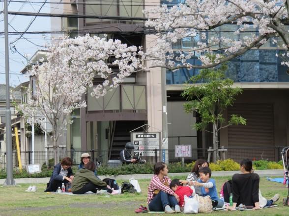 28.3.6森下公園お花見へ 108_ks