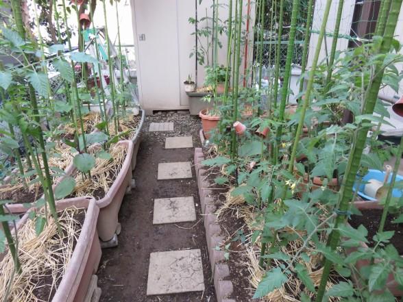 28.5.1家庭菜園 016_ks