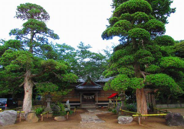 白幡神社歴史あるマキの木とお庭