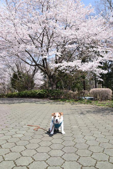 2016長岡公園0178