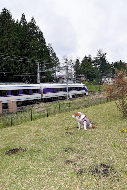 2016日光だいや川公園044