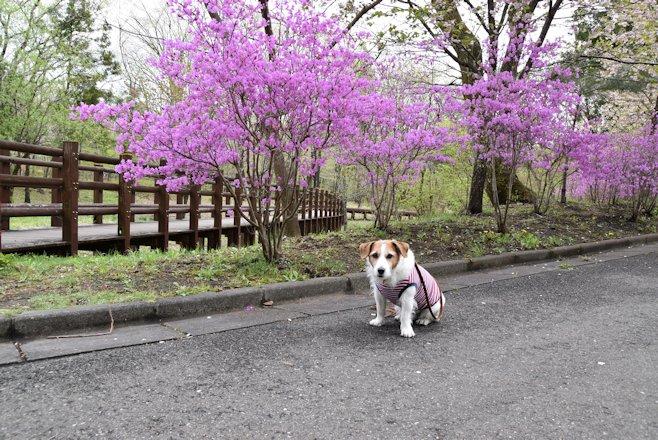 2016日光だいや川公園045
