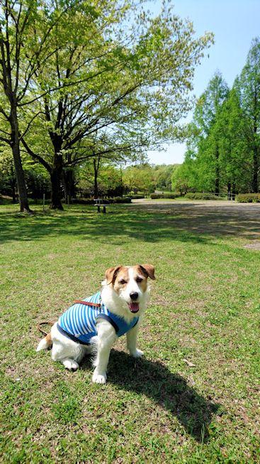 2016長岡公園0189