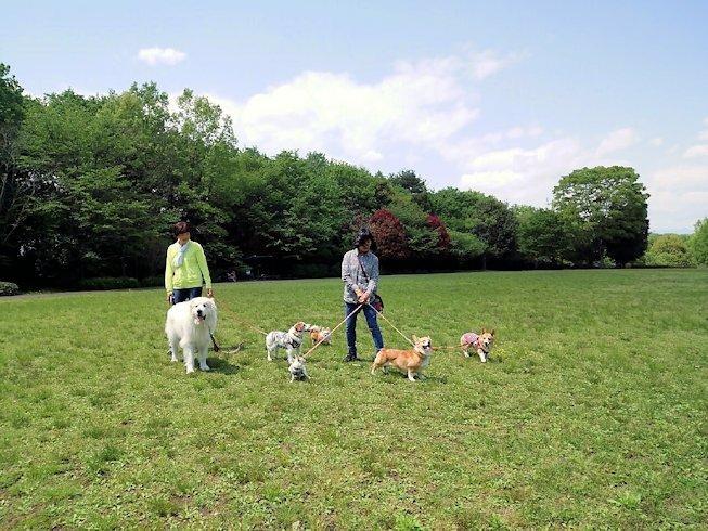 2016長岡公園0208