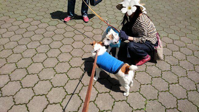 2016長岡公園0219