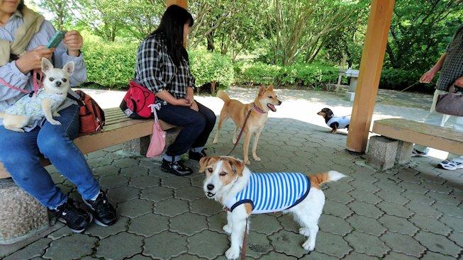 2016長岡公園0256