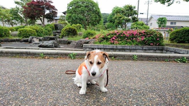 2016散歩081