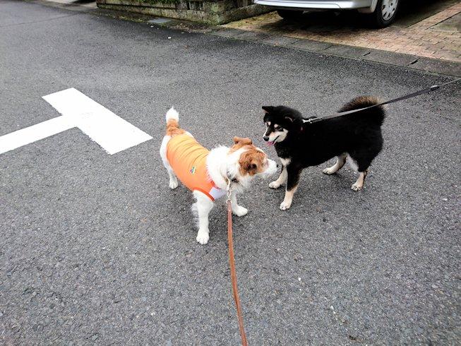2016散歩089