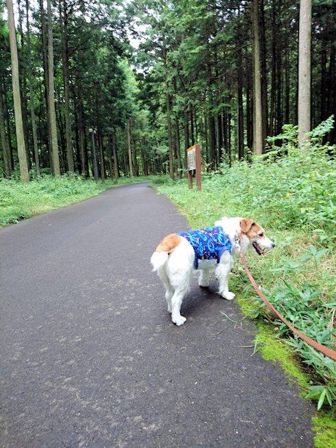 2016日光だいや川公園050
