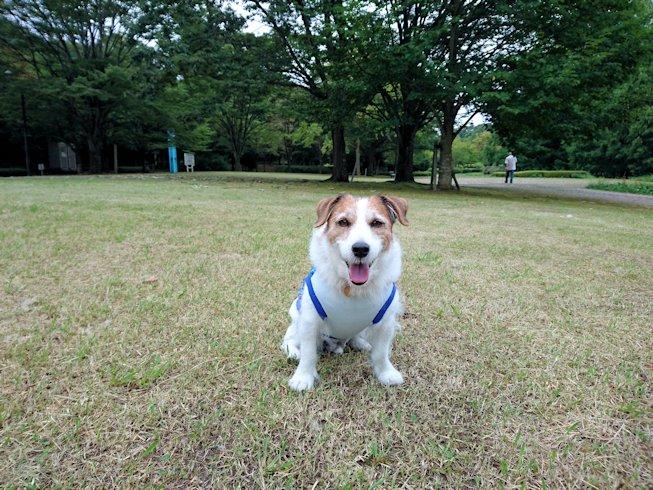 2016長岡公園0324