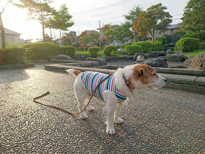 2016散歩120