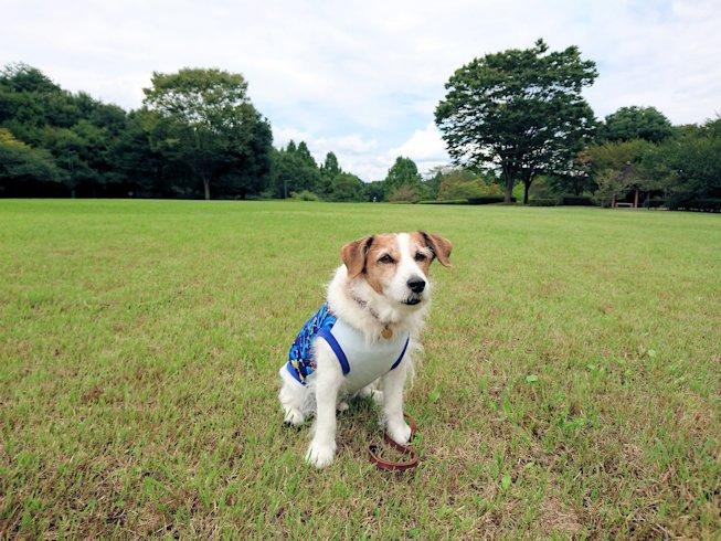 2016長岡公園0336