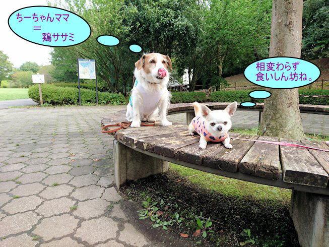 2016長岡公園0339