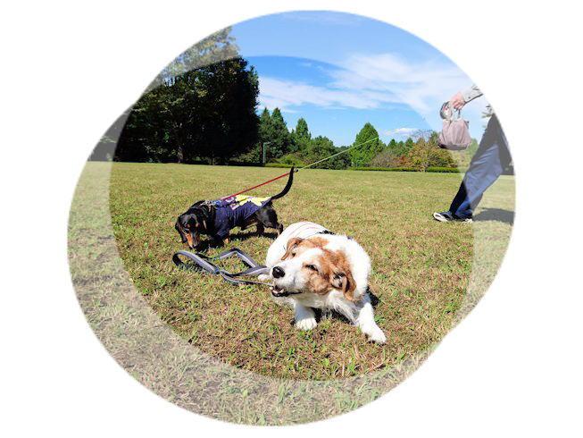 2016長岡公園0361