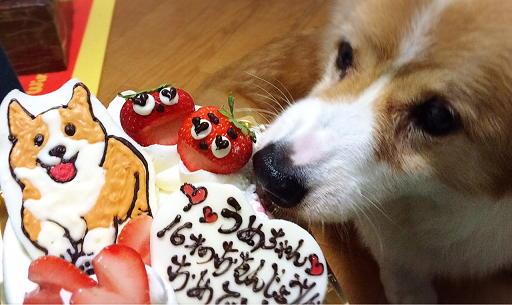 サプライズケーキ(1)
