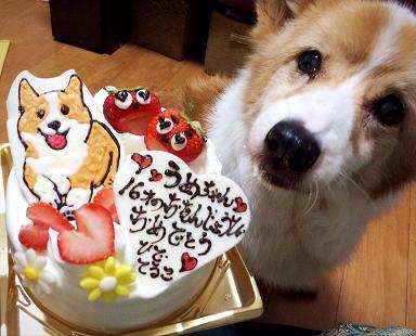 プティパのケーキ(1)