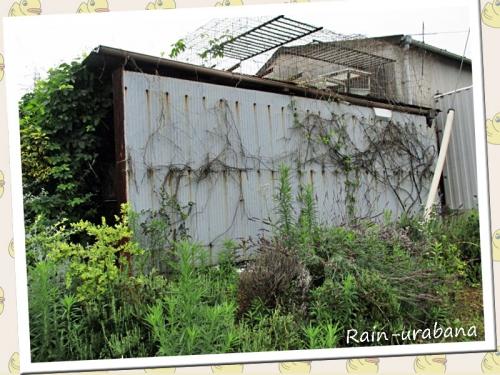 猫小屋の裏側 (^ ^) モッサモサの無法地帯 プッ