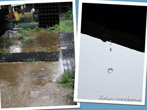 予定通り雨 (^ ^V