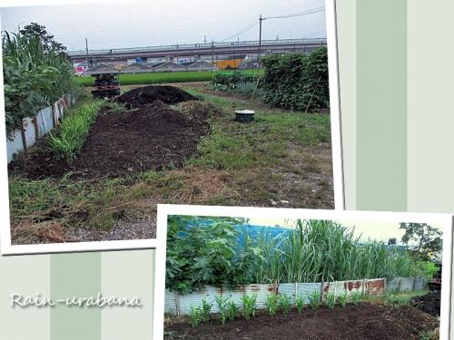 波トタンの向こうはお隣の畑ですぅ (^ ^)