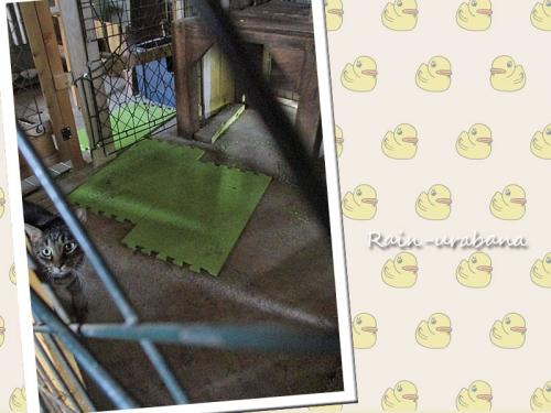 猫たちのマットを巣の材料に使ったのねぇ~
