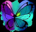 8880165悪夢の蝶