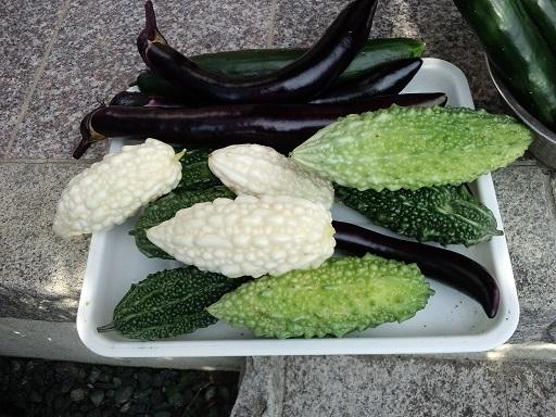 20160727_今日の収穫