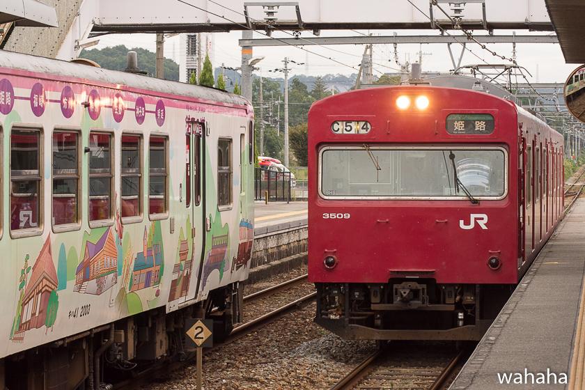 280925bashamichi_danrin--7.jpg