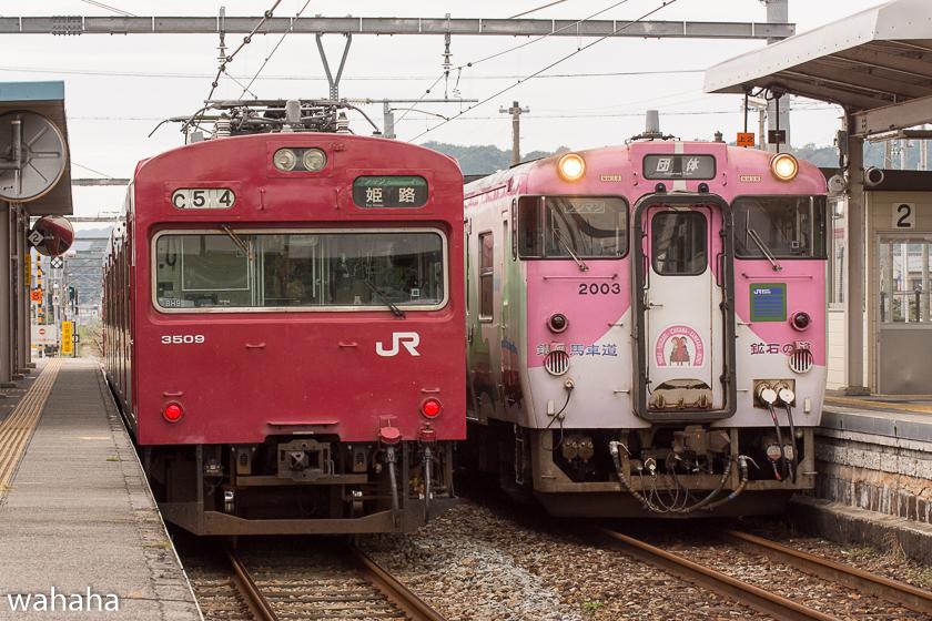 280925bashamichi_danrin--8.jpg