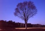 4.樹木-09P 90t