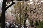 1.銀座桜通り-04D 1604qt